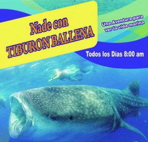 Nado con Tiburon Ballena reserva tour