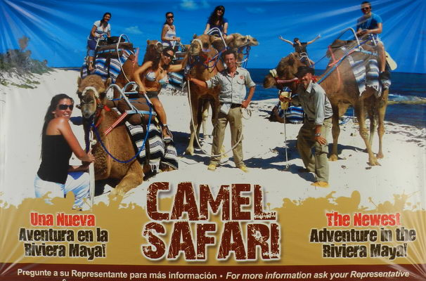 camel safari ride playa del Carmen